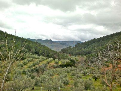 Olivares de la Sierra de Segura