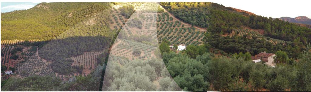 rutas del aceite en Jaén