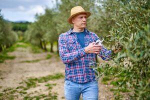 hombre podando olivo