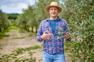 epoca de poda del olivo